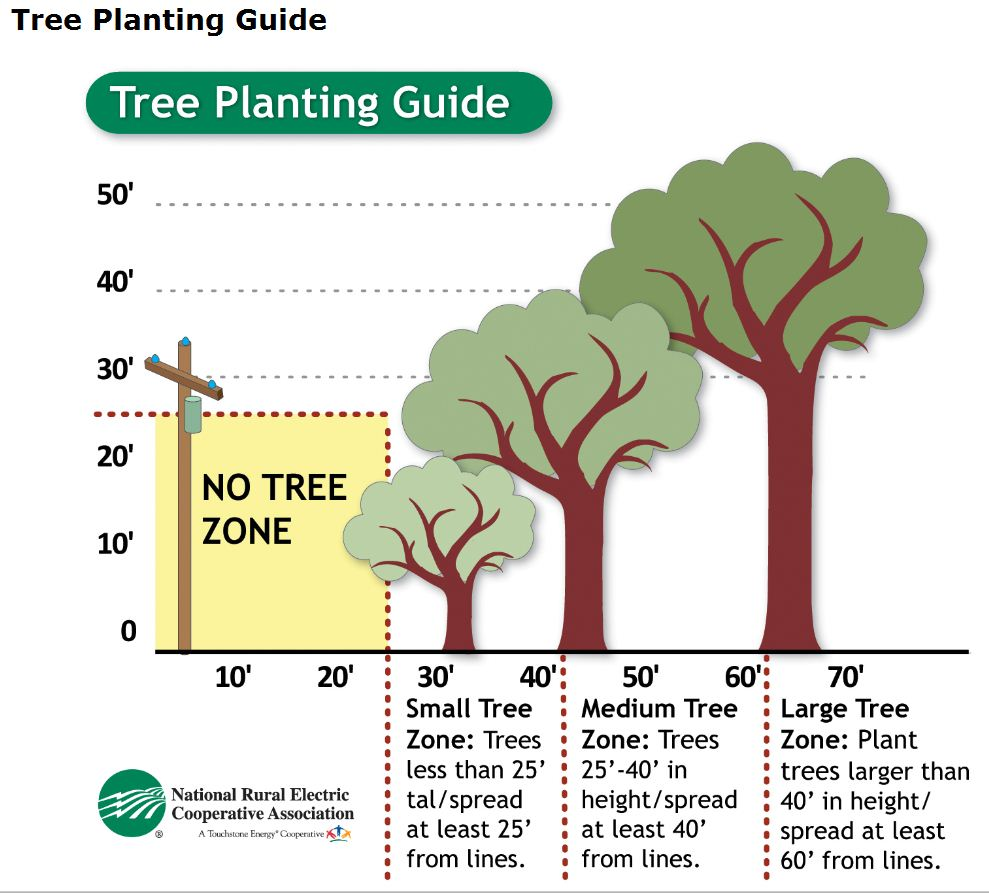 Tree Planting Infographic